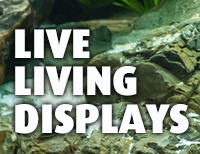 Live Living Displays