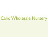 Calix Nursery