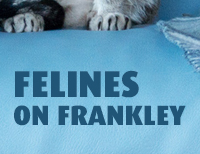 Felines on Frankley