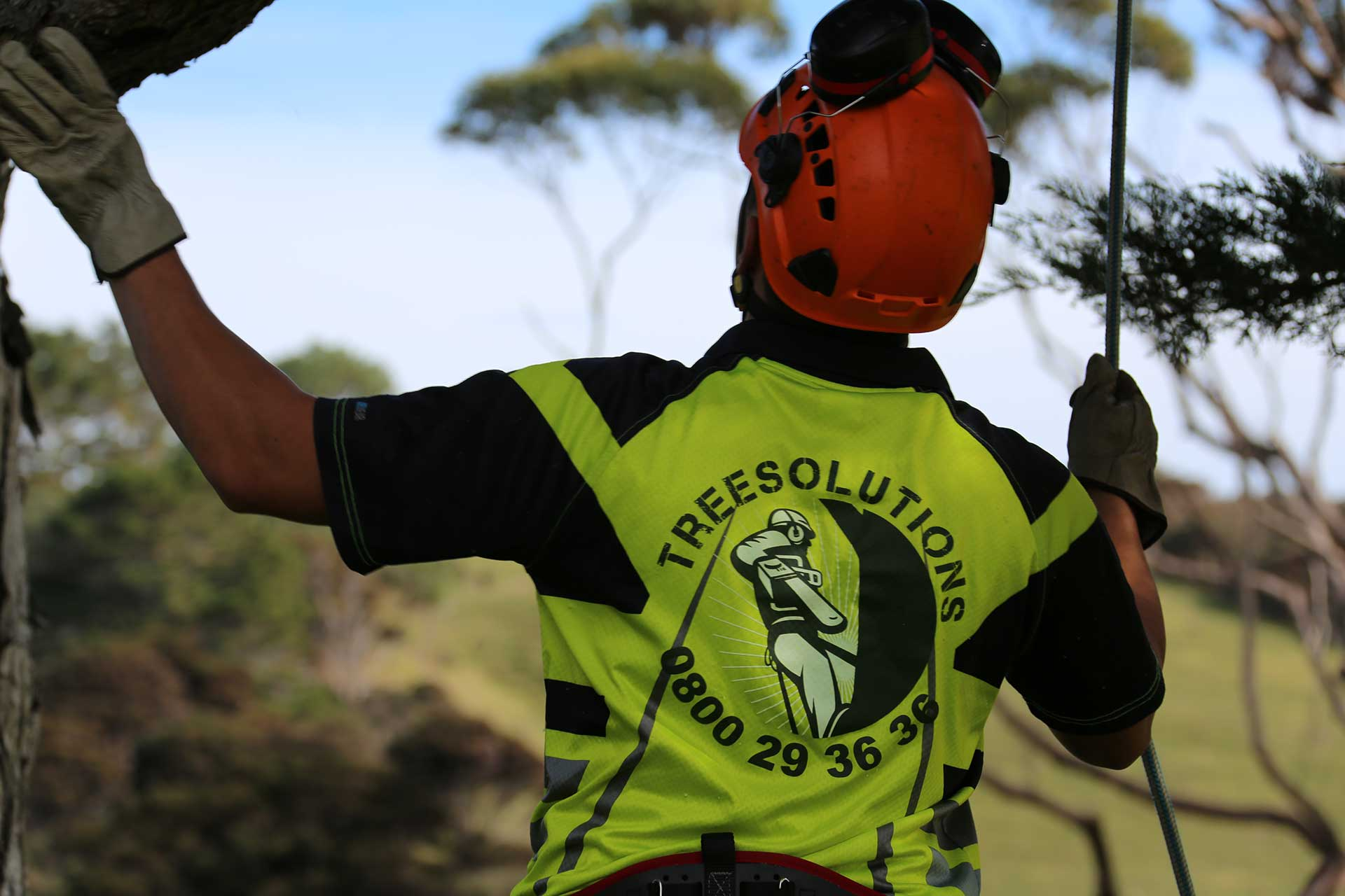 Qualified Arborist team