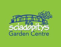 Sciadopitys Garden Centre
