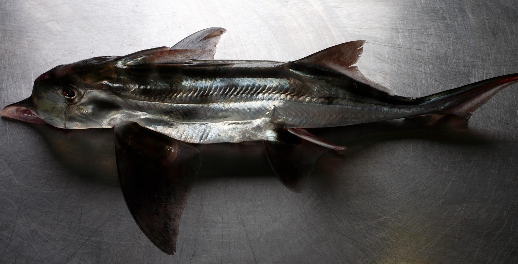 Harbour Fish Wholesale Dunedin | Yellow® NZ