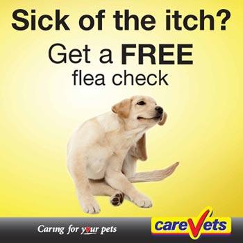 Free Flea Checks