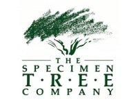 [Specimen Tree Company]