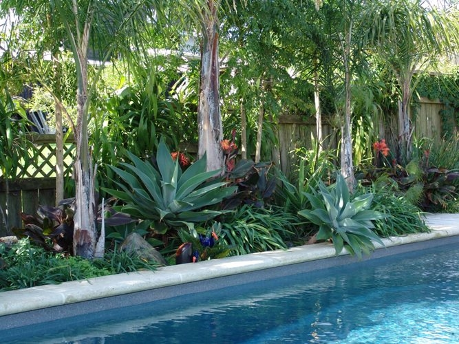 Residential pool - subtropical planting scheme