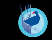 Pukeko Blue Science Communication