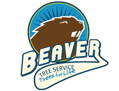Beaver Trees