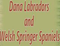 Dana Labradors and Welsh Springer Spaniels