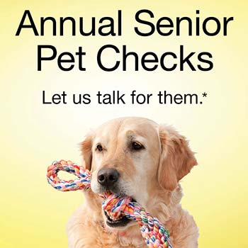 Annual Senior Pet Health Checks