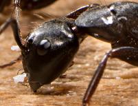 Target Pest Canterbury Ltd