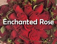 [Enchanted Rose]